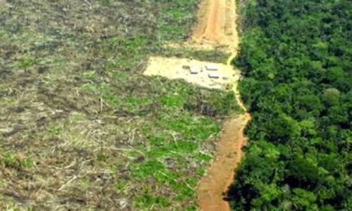 Argentina entre las mejores… en deforestación