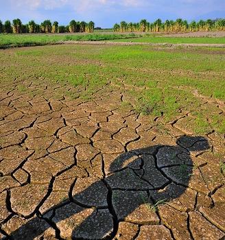 ¿Por qué es importante el componente de adaptación en el Acuerdo de Paris?