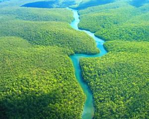 Acuerdo de París fortalece el rol de los bosques en la lucha contra el cambio climático